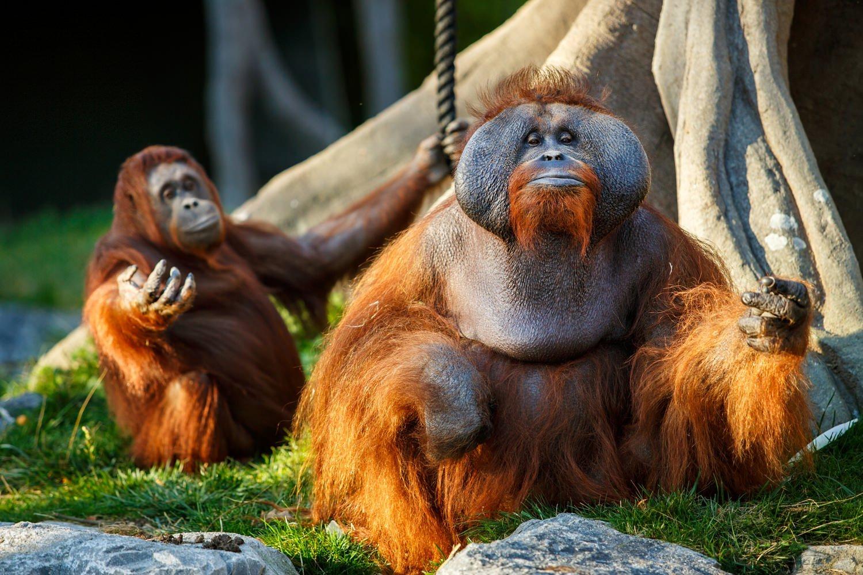 Dublin-Zoo-